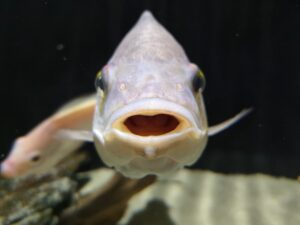 Read more about the article 10 Fish Keeping 'Facts' That Are Pure Myth.